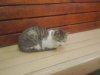20080523_cat