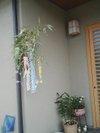 20090707_tanabata