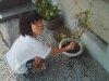 20090822_asagao1