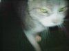 20091005_cat